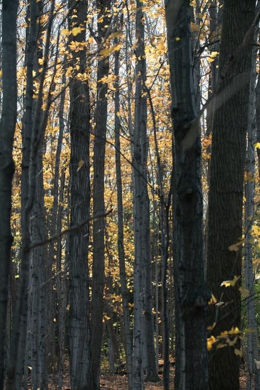 _8500681 Trees