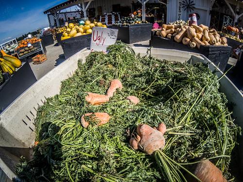 Schuh Farms and Pumpkins-013