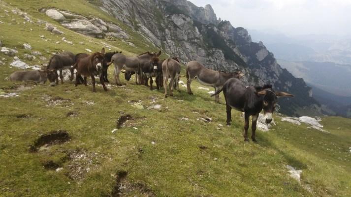 Magarusi pe Valea Gaura.