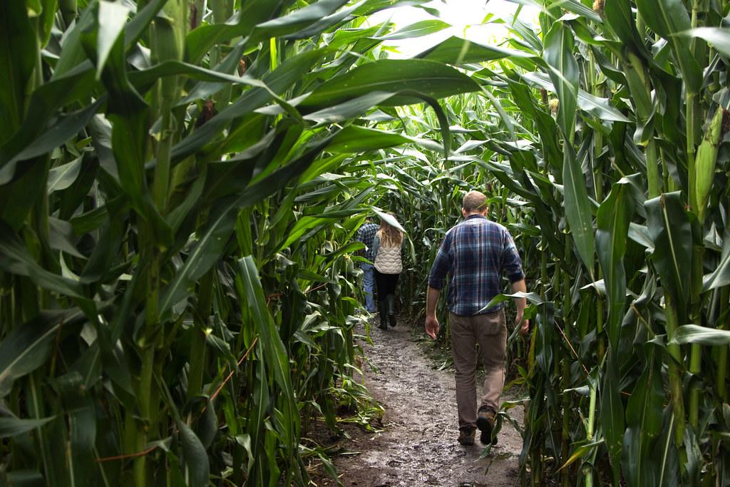 Swan Trail Farms Corn Maze