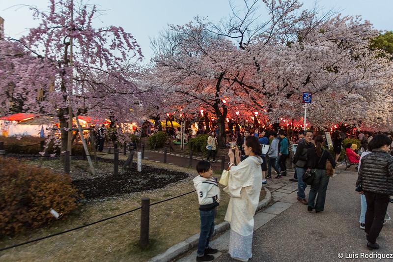 Profiter du hanami nocturne à Nagoya
