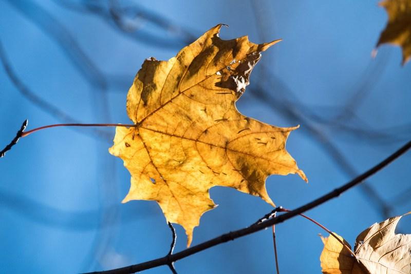 _8500685 Leaf