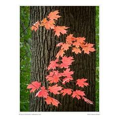 Detail: Autumn Bling II