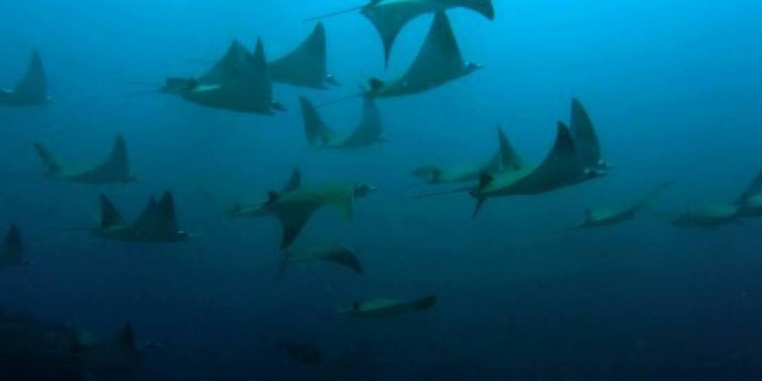 Socotra scuba diving