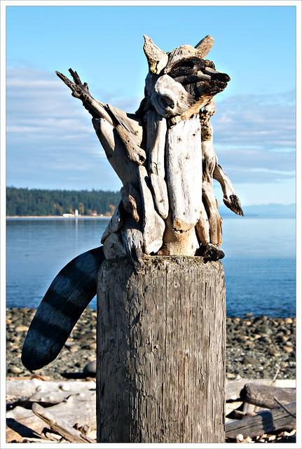 Beach Raccoon