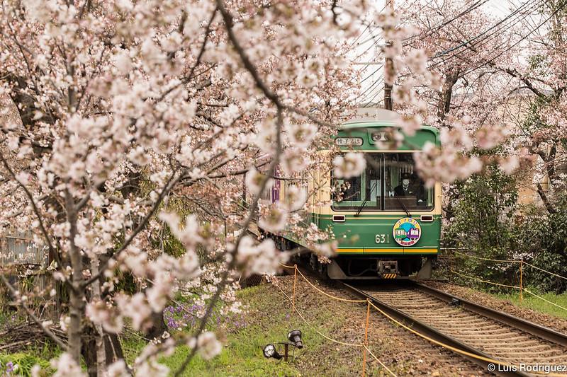 Tunel-Sakura-Kioto-Randen-33