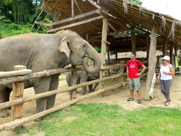 Centro de conservación de Elefantes