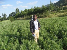 Kindu Mekonnen during his field visit to see Sweet lupin (food- feed) seed multiplication