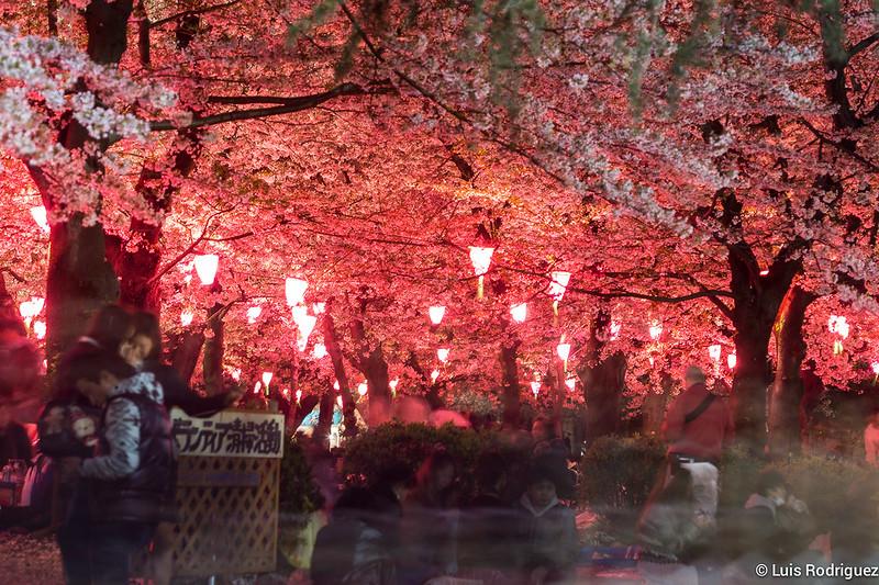 Parque-Tsuruma-Nagoya-34
