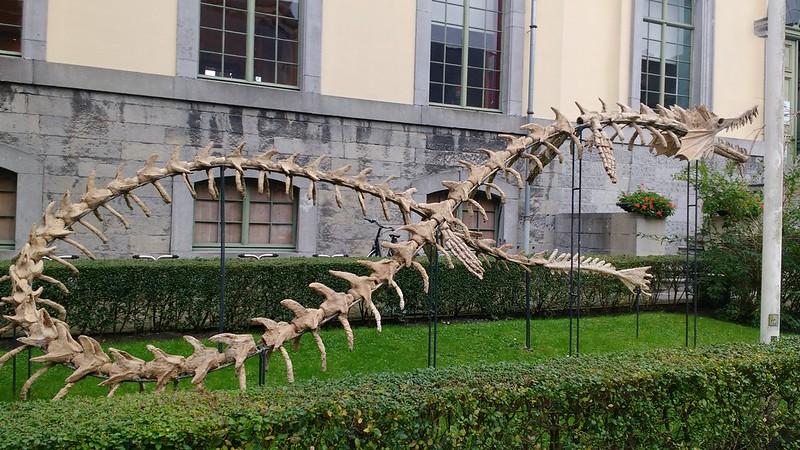 Museo Historia Natural para jóvenes 37359527840 5782e0f8e0 c  - 37359527840 5782e0f8e0 c - Gante para niños: El Mundo de Kina