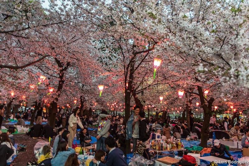 Tables pleines de boissons dans un hanami à Nagoya