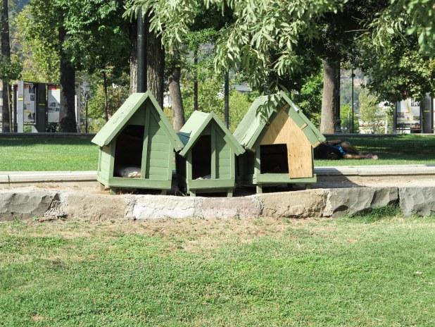 Perros en Santiago de Chile