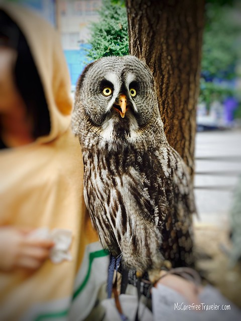 Owl at Akihabara