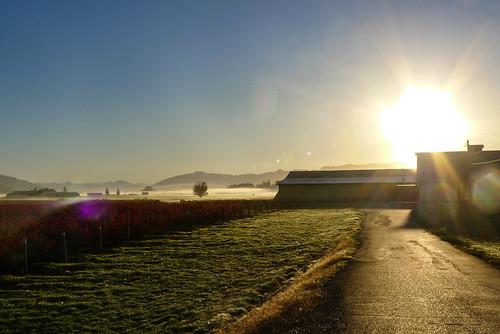 Skagit Valley Foggy Sunrise