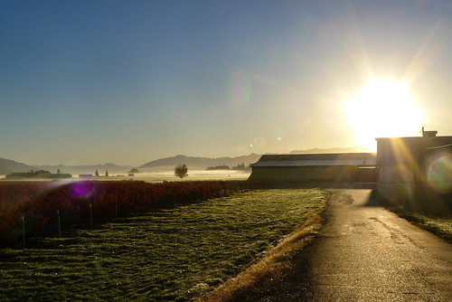 Skagit Valley Foggy Sunrise