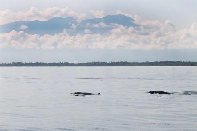 Irrawaddy Dolphins & Mt. Kanlaon