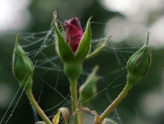 AWS_Spider1_Trioplan50f2,9
