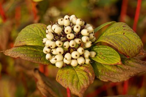 Le bouquet de graines The bouquet of seeds