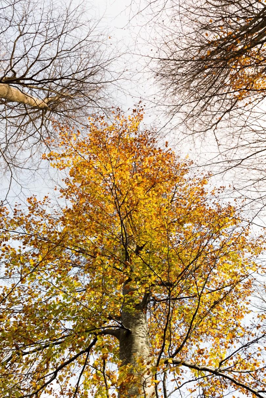 Colorful Autumn Tree