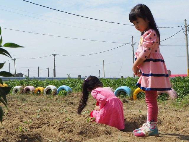 口湖金湖休閒農業區 (7)