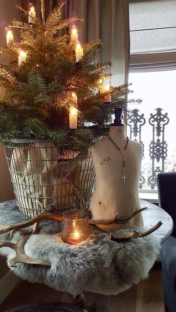 Kerstboom in draadmand
