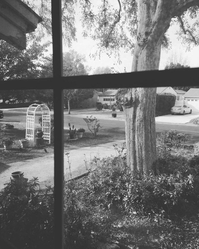 My Los Angeles 7 - The Front Garden and Neighborhood Looking out upon our front garden and the neighborhood. #neighborhood #houses #street #trees #garden #home #LA #losangeles #california #ig_losangeles #losangeles_gram #wheream_I_LA #insta_losangeles #ca