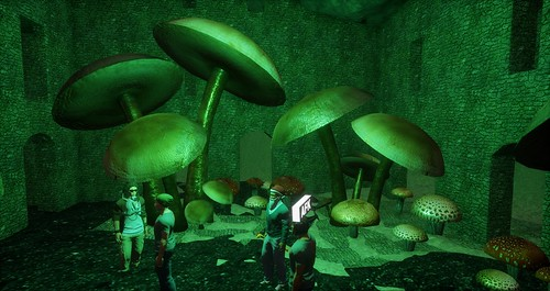 Cave Mushrooms