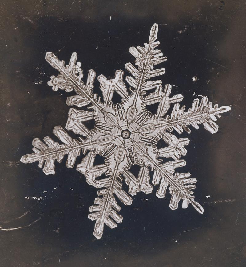the snowflake man of