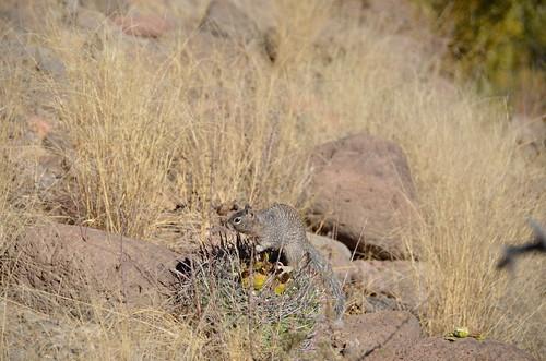 Gila Box Riverview Campground a squirl
