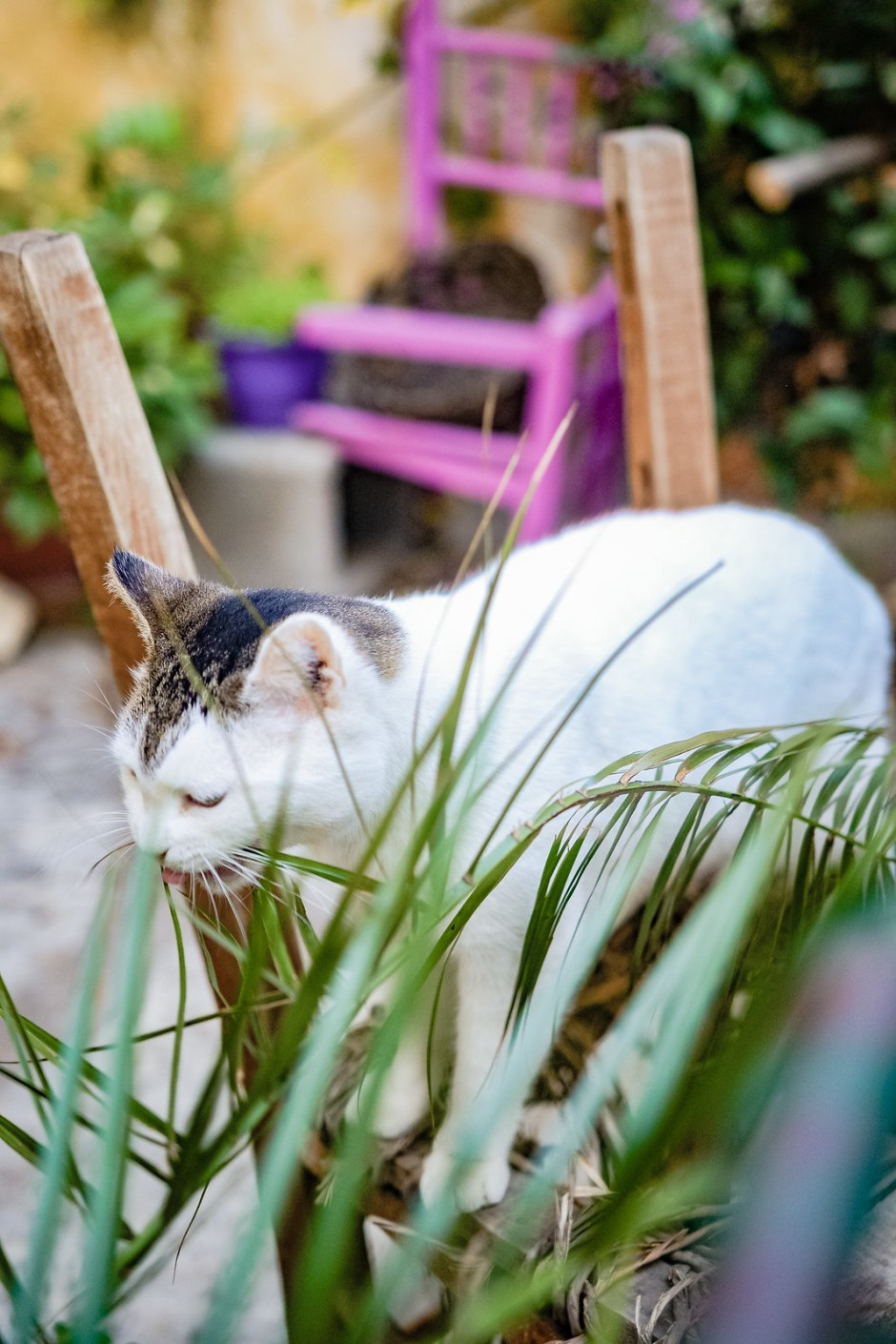 Athens travel diary with cats-7