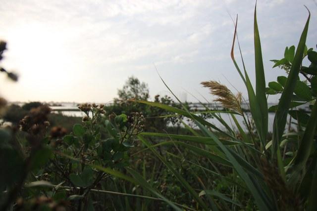口湖成龍濕地 (25)