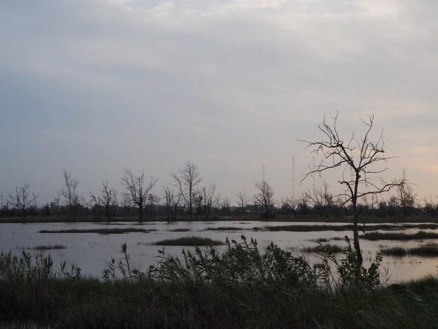 口湖遊客中心 (7)