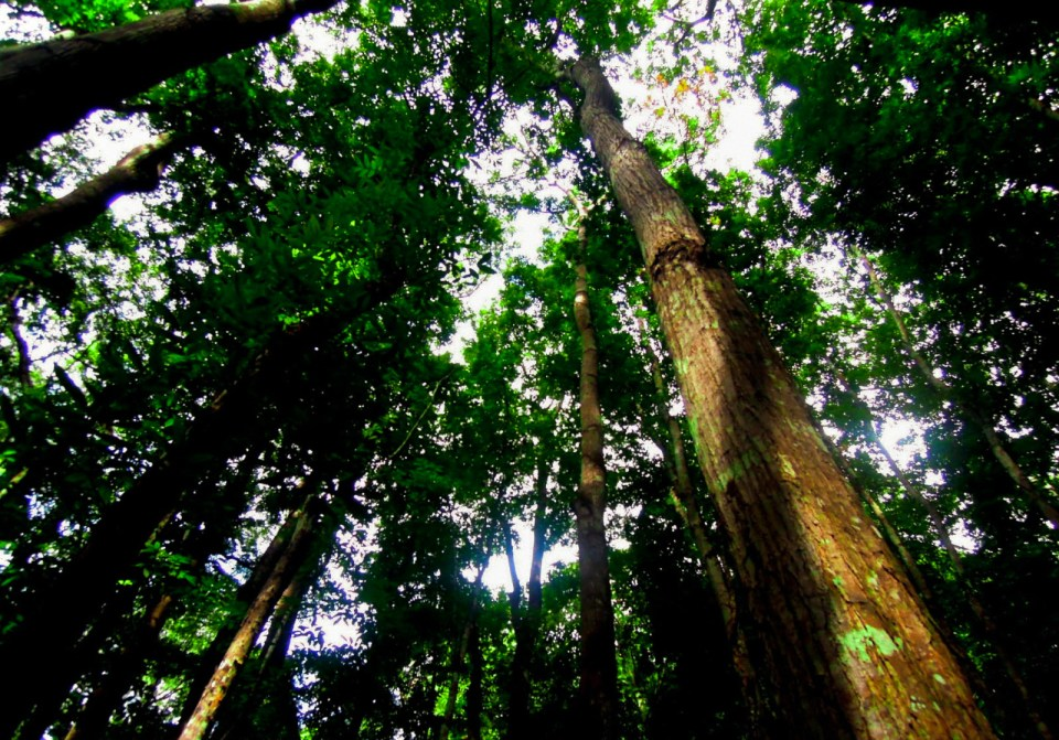 trees-man-made-forest-bohol