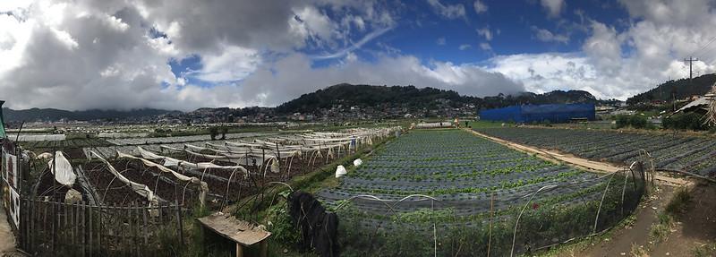 20171108_132353 Strawberry Farm, La Trinidad
