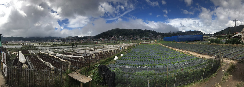 20171108_132353 Strawberry Farm, La Trinidad