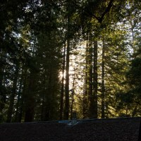 Big Basin State Park: Sequoia Trail