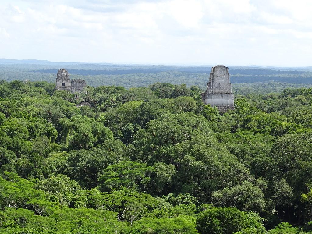 Tikal panoramica desde Templo II o de la Mascara ciudad Maya Sitio Arqueologico Guatemala 02