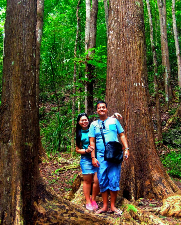 man-made-forest-bohol-shot