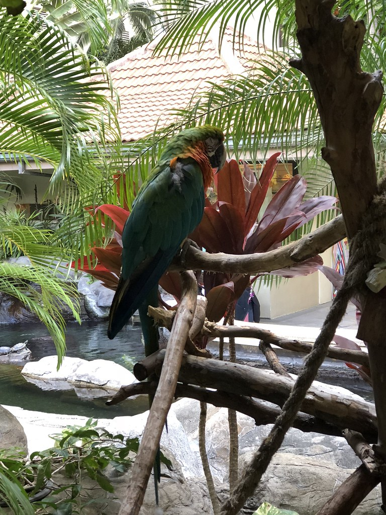 One of the many beautiful birds around the resort.