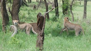 Affordable Tanzania safari and tour packages