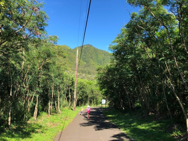 Picture from the Kuli'ou'ou Valley Trail