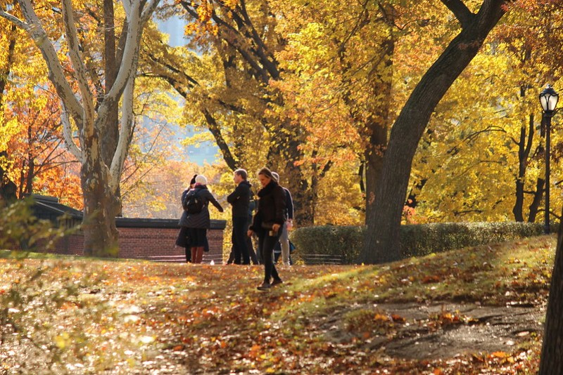 Central Park Fall Foliage
