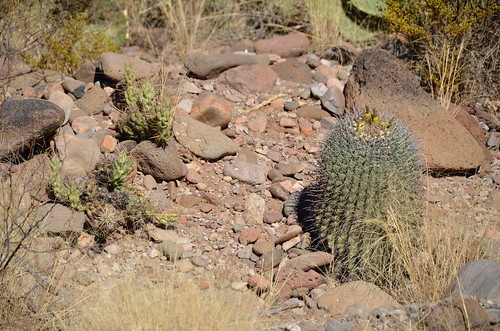 Gila Box Riverview Campground cactus on the trail