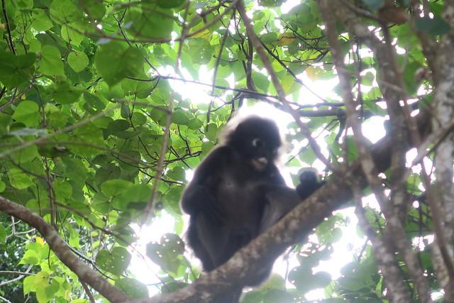 Mangrove @ Andaman Langkawi