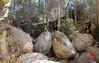 Cova Roja Biar-15