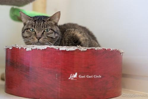アトリエイエネコ Cat Photographer 39390637312_212099aef5 花の木シェルター