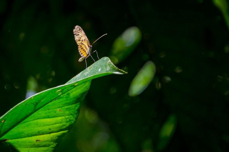 Mariposa, Parque Nacional del Manu