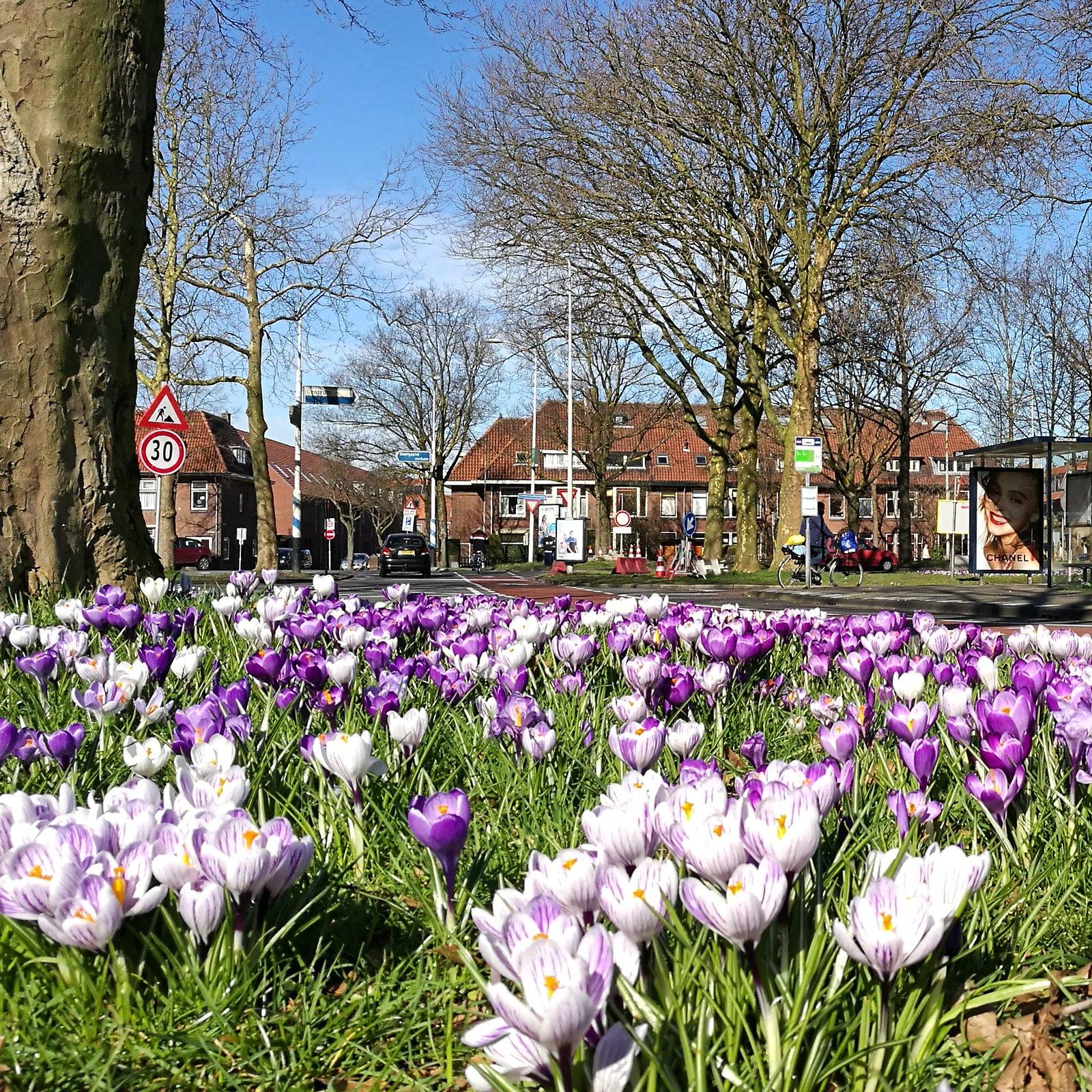 hollantilainen kukkaloisto