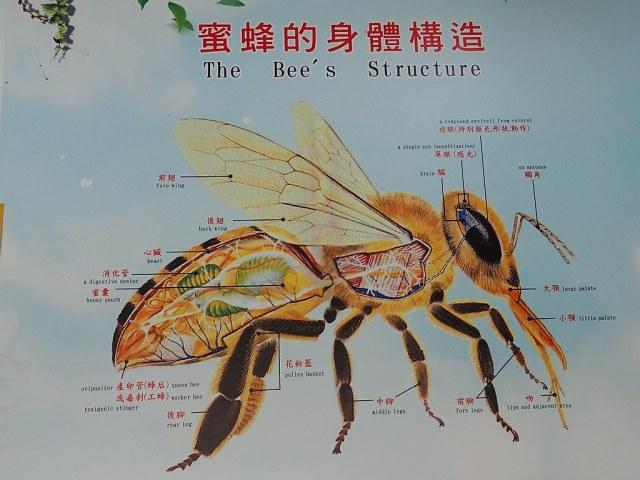 古坑三美養蜂 (7)