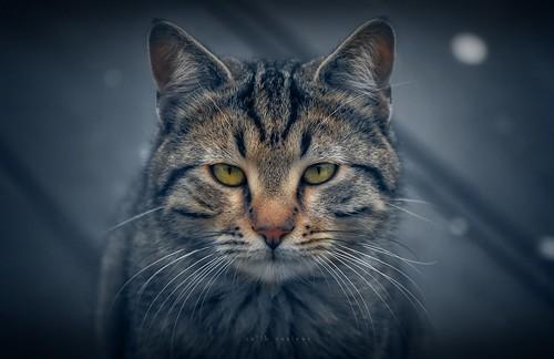 Cat stories - a little sad..